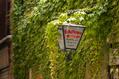 916_ - Overgrown Lantern
