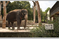 286_ - Elephant In Zoo