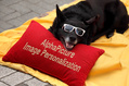708_ - Dog With Pillow