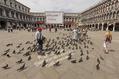 786_ - Venice Pigeons