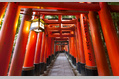 950_ - Kyoto Temple