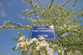 988_ - Sign amid Flowering Tree
